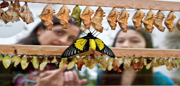Sensational Butterflies at Natural History Museum