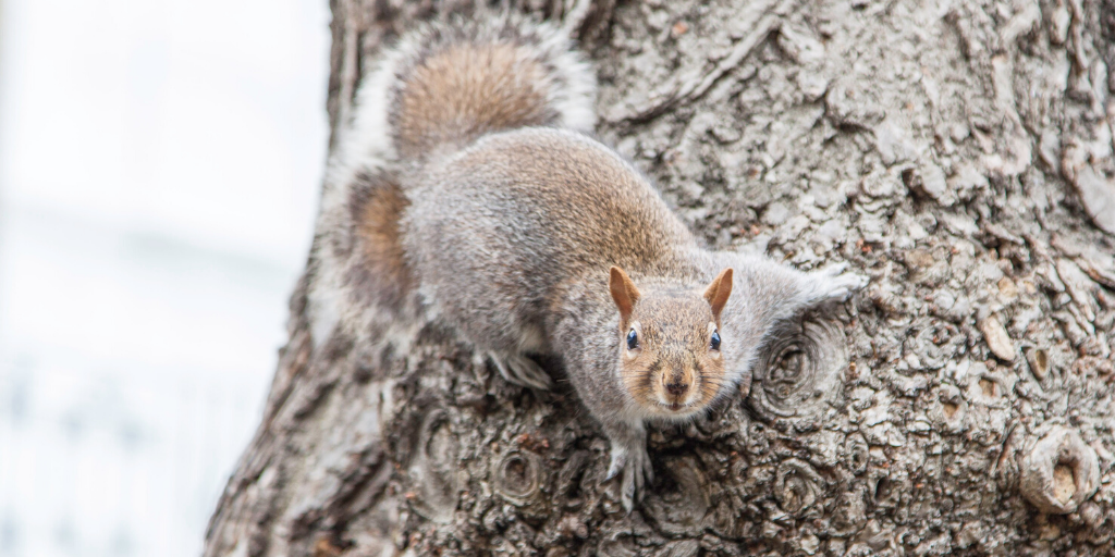 Have you been upstaged by a squirrel?